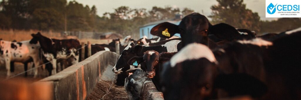 Artificial Insemination in Dairy