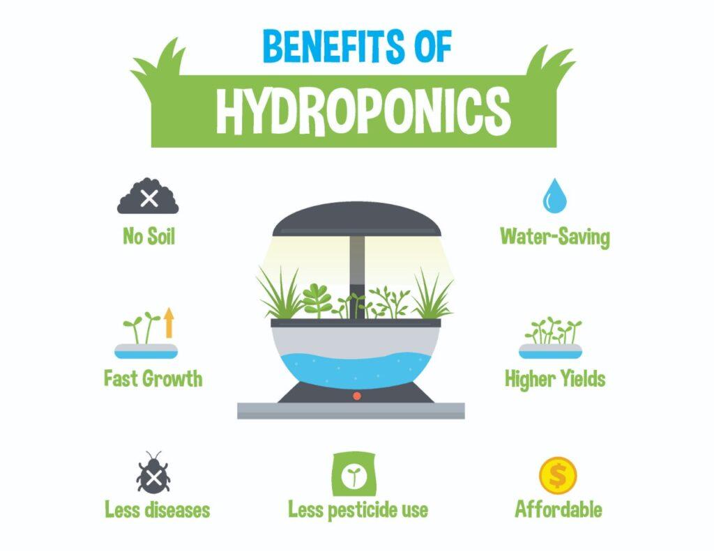 Hydroponics Fodder