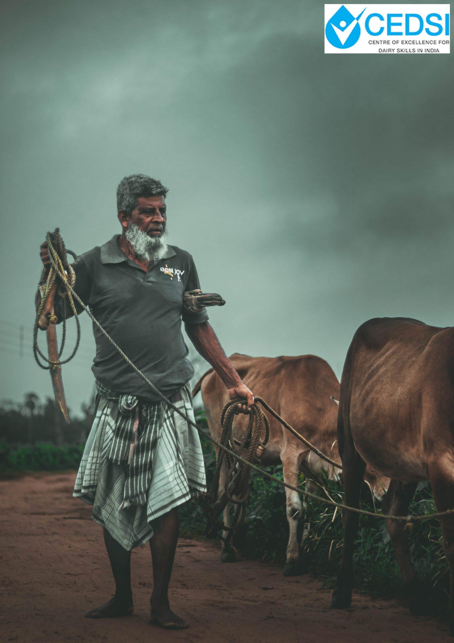 Dairy Cattle Diseases